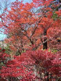 Kotorigashima2_2