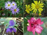 Floweringarden_r