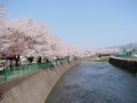 Momonoki_r