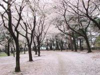 Shikishima_r