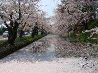 Hirosaki13