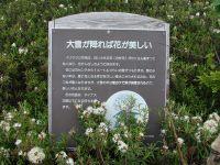 Haimatsu2