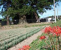Ookaya