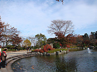 Sakurayam5