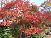 Sakurayama4