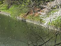 Kinkuro