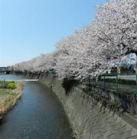 Momonoki5