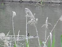 Kaitsuburi