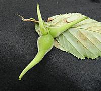 Tunohashibami