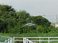 Aosagi5