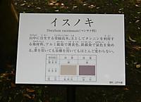 Isunoki
