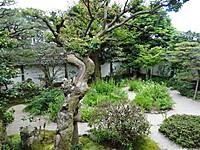Yakumoniwa