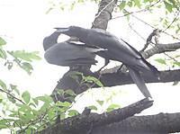 Hashibutogarasu