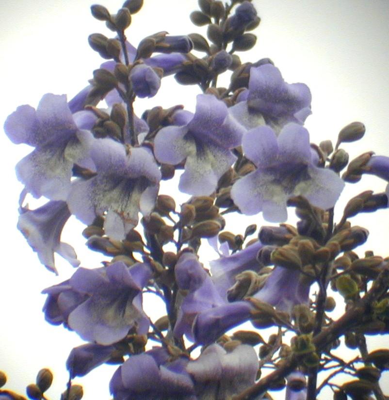 キリの画像 p1_38