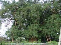 Ookaya2